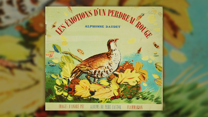 Alphonse-Daudet,--perdreau-rouge