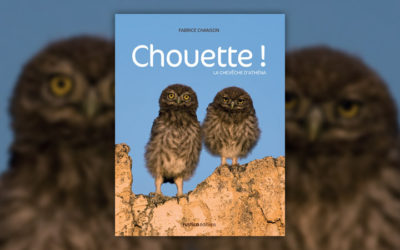 Fabrice Chanson, Chouette! La chevêche d'Athéna